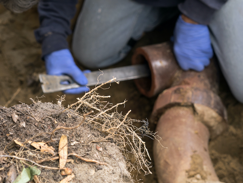 tree root infiltration can affect your plumbing system without you even knowing about it!